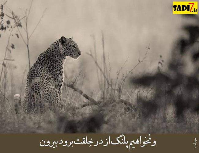 پیام تبریک ماشین نو عکس نوشته تیر 94